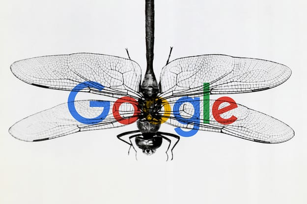Image result for google dragonfly